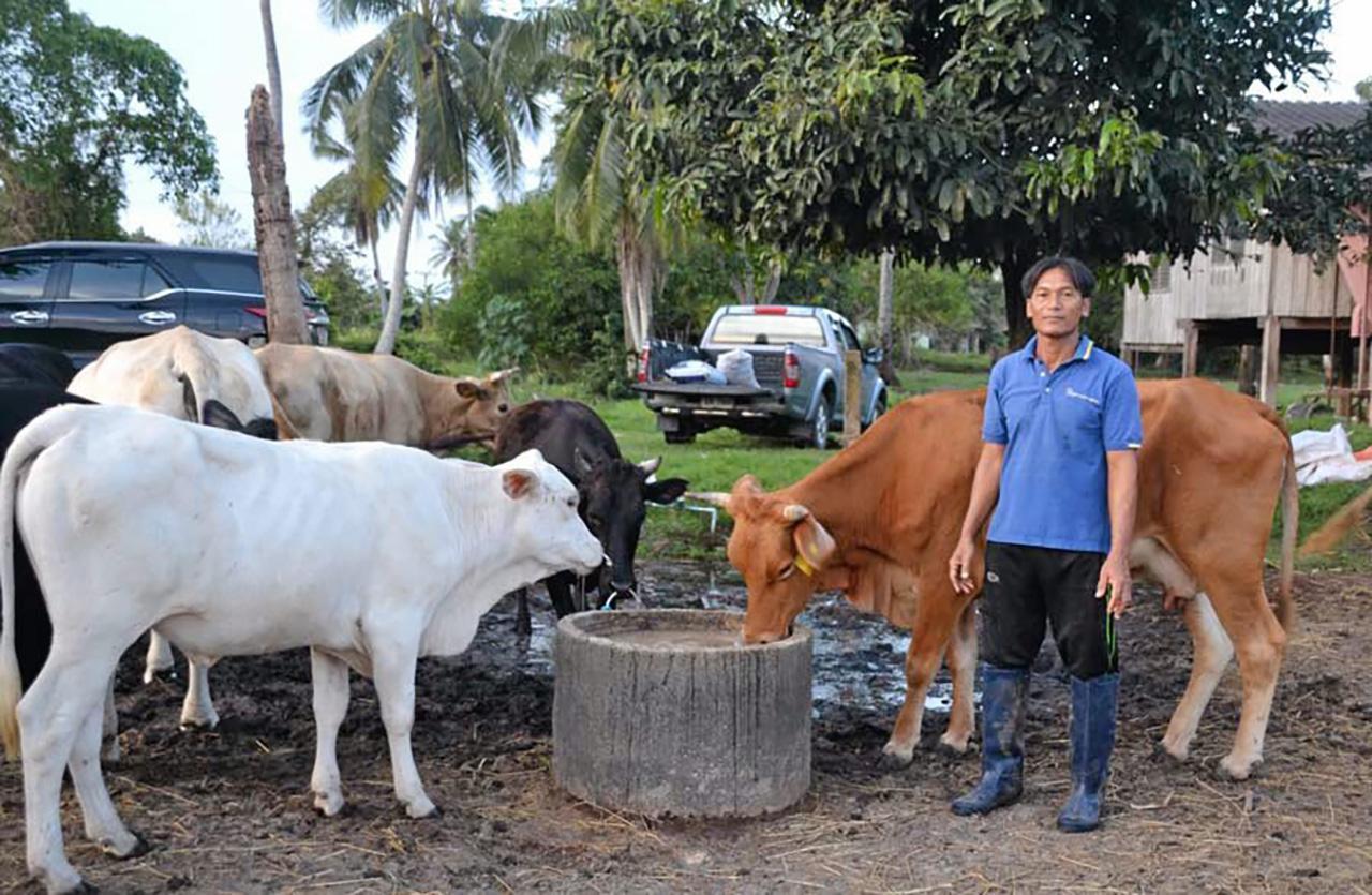 ชาวบ้านหมู่ 8 ต.ลำปํา อ.เมือง จ.พัทลุง หนึ่งในเกษตรกรเลี้ยงโค ในโครงการนี้ต่างพอใจที่มีรายได้มั่นคงและยั่งยืน.