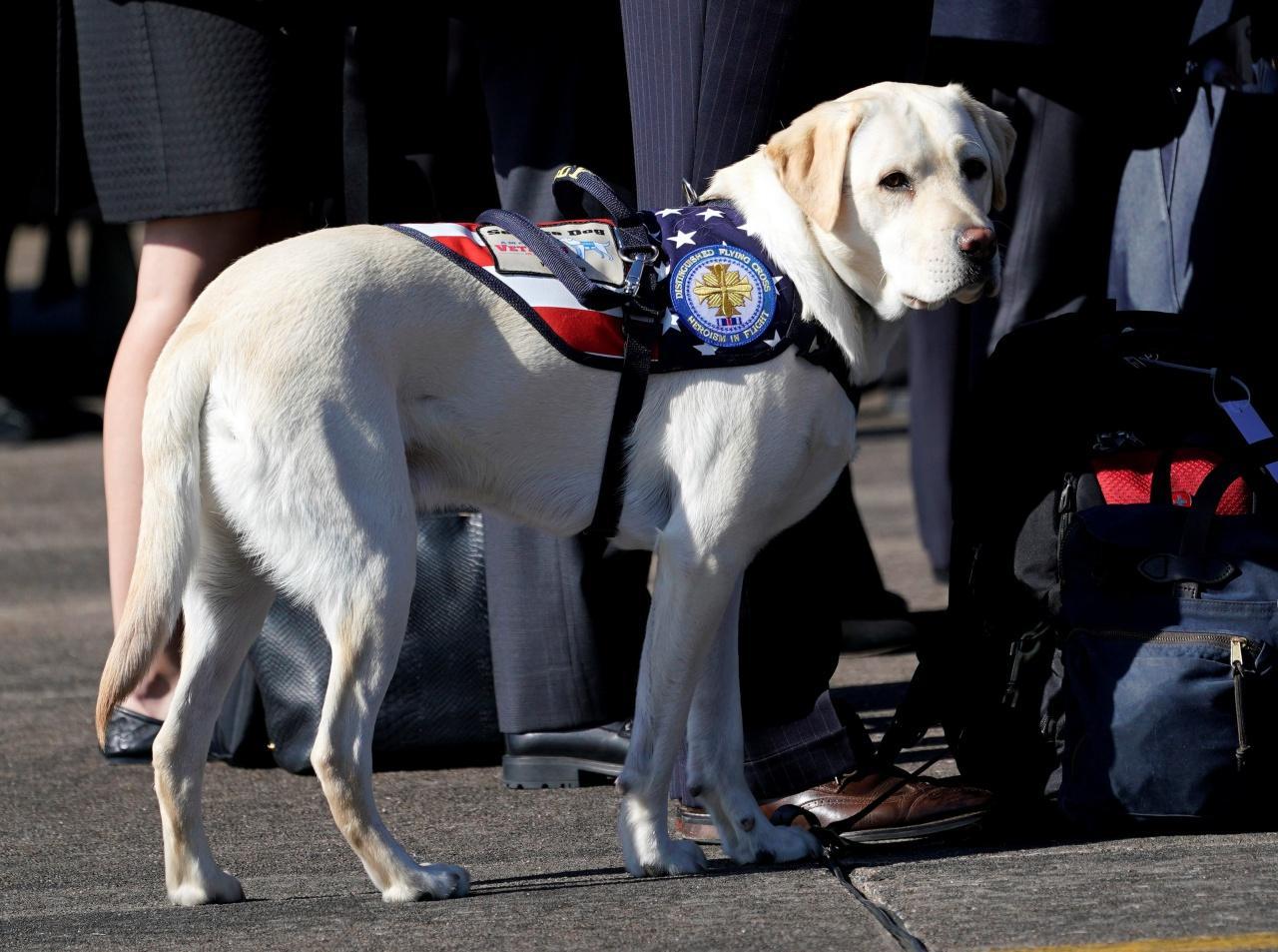 ซัลลี สุนัขช่วยเหลือผู้ป่วยคู่ใจของอดีตประธานาธิบดี จอร์จ บุช