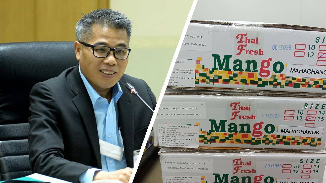 ไทยเฮ! เกาหลีใต้ไฟเขียวให้ส่งออกมะม่วงมหาชนกครั้งแรกของประเทศ