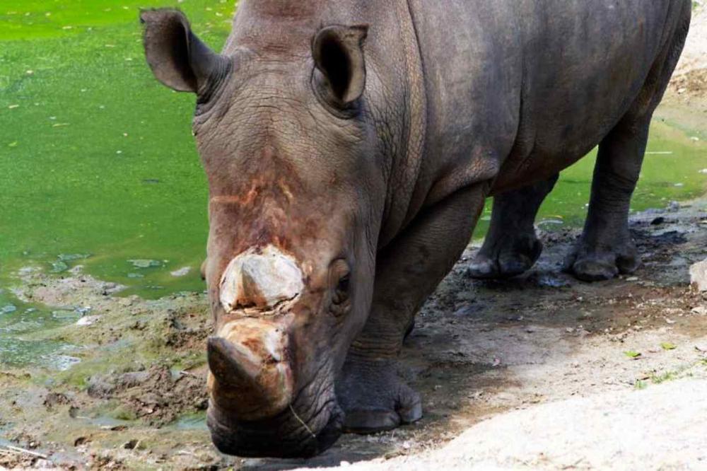 ภาพจากองค์การสวนสัตว์แห่งประเทศไทย
