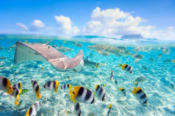 ปลาสีสวยหลากหลายสายพันธุ์ที่คุณจะเห็นได้ใกล้ๆ แค่เอื้อม