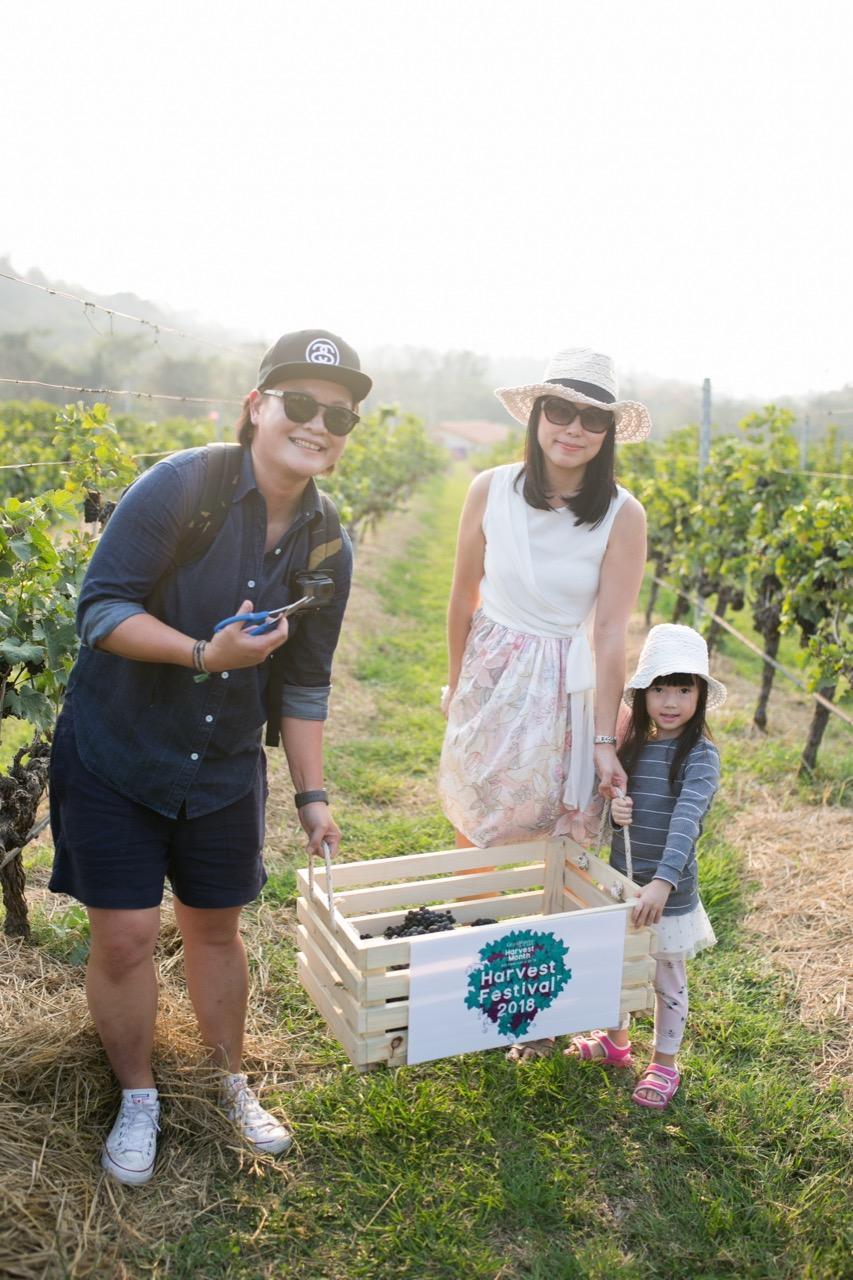 ผู้เข้าแข่งขันเก็บองุ่นไวน์ เทศกาล Harvest Festival 2018