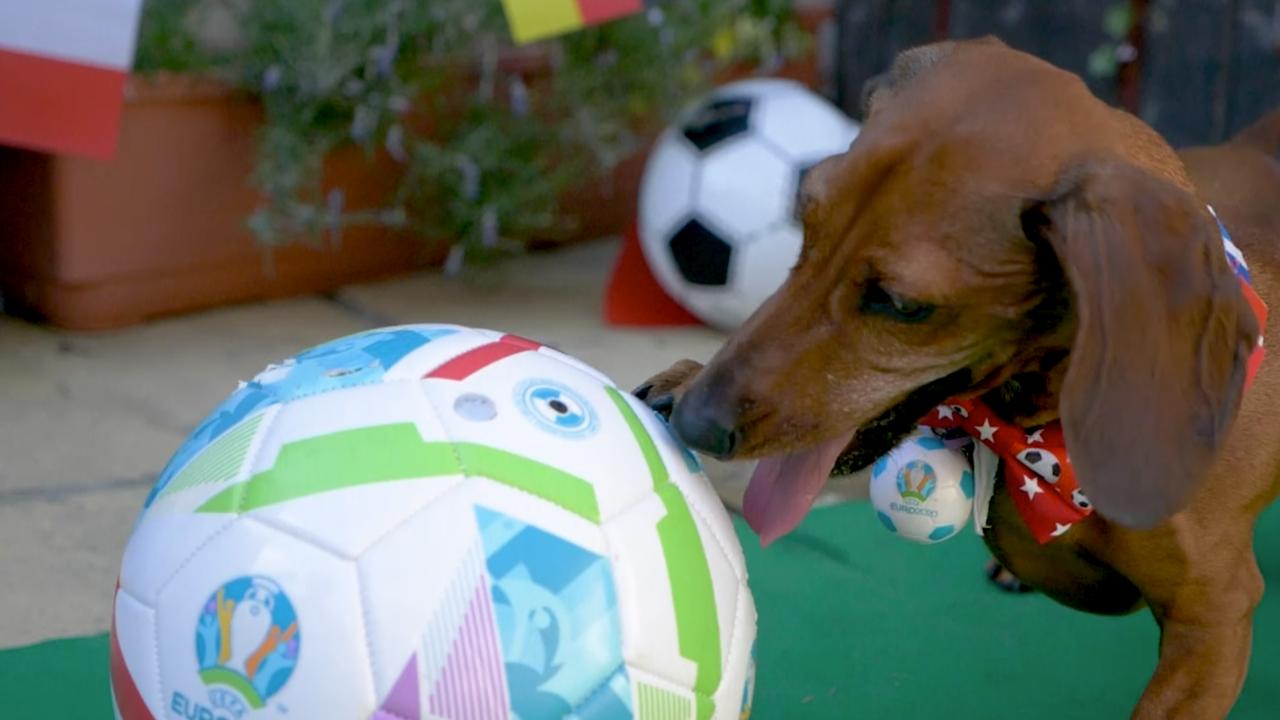 """ปลดล็อกแล้ว """"ไส้กรอกพยากรณ์"""" ทายผลบอลยูโร 2020 ถูกคู่แรก เกมส่งท้ายกลุ่มเอ"""